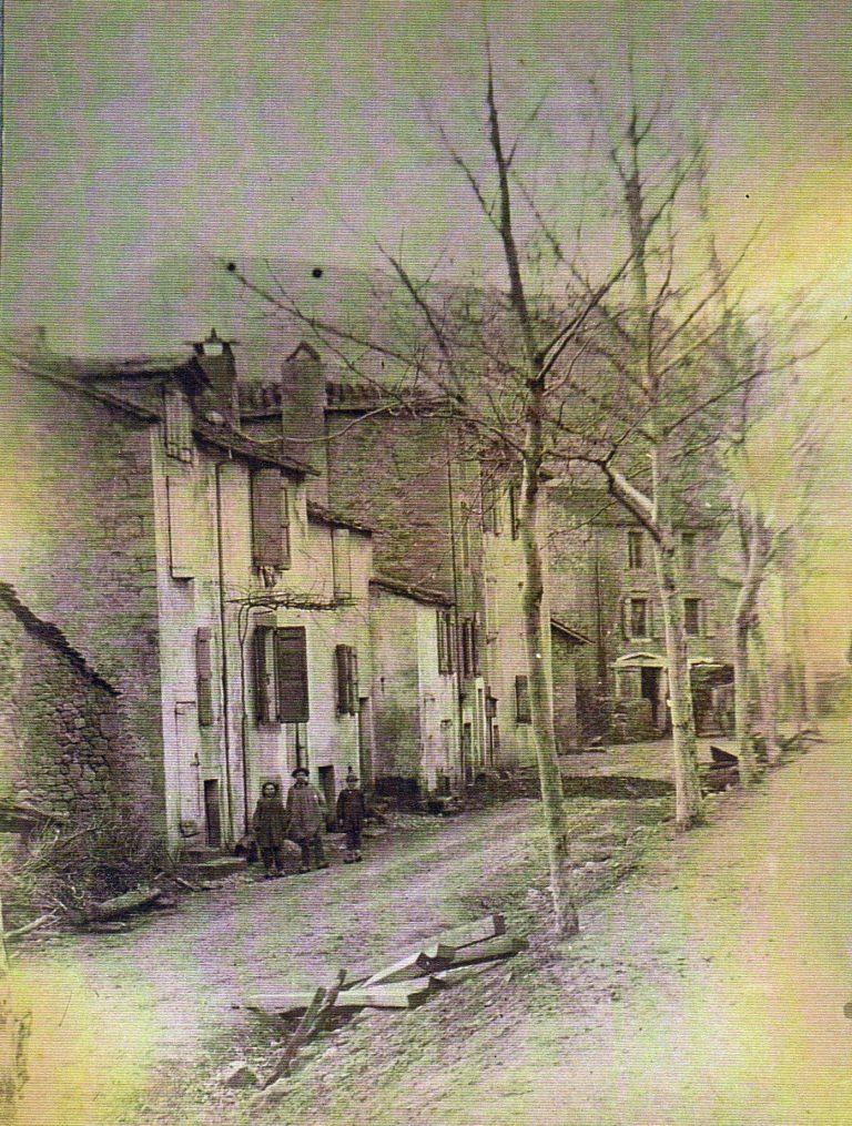 Lapeyre avenue Platanes